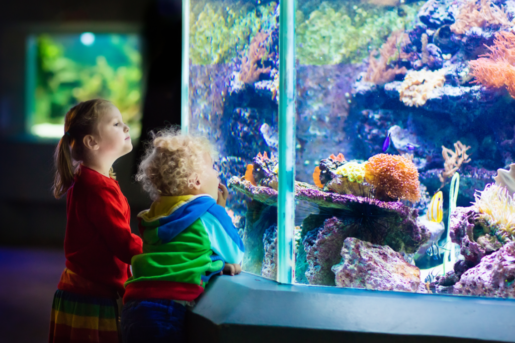 Children looking into a large fish tank