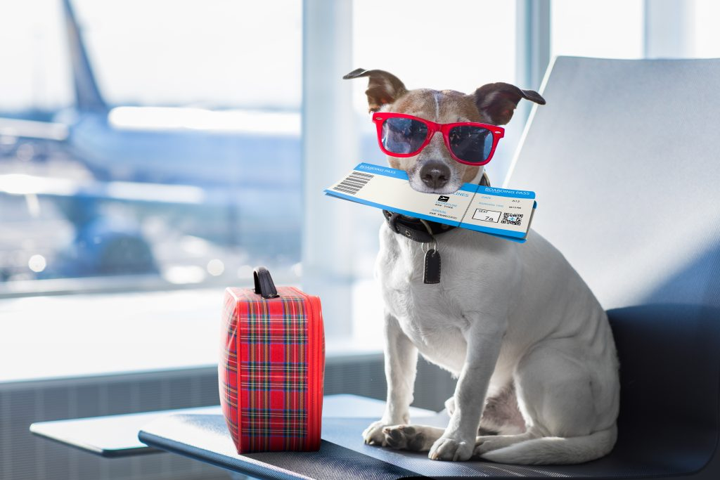Pets Abroad
