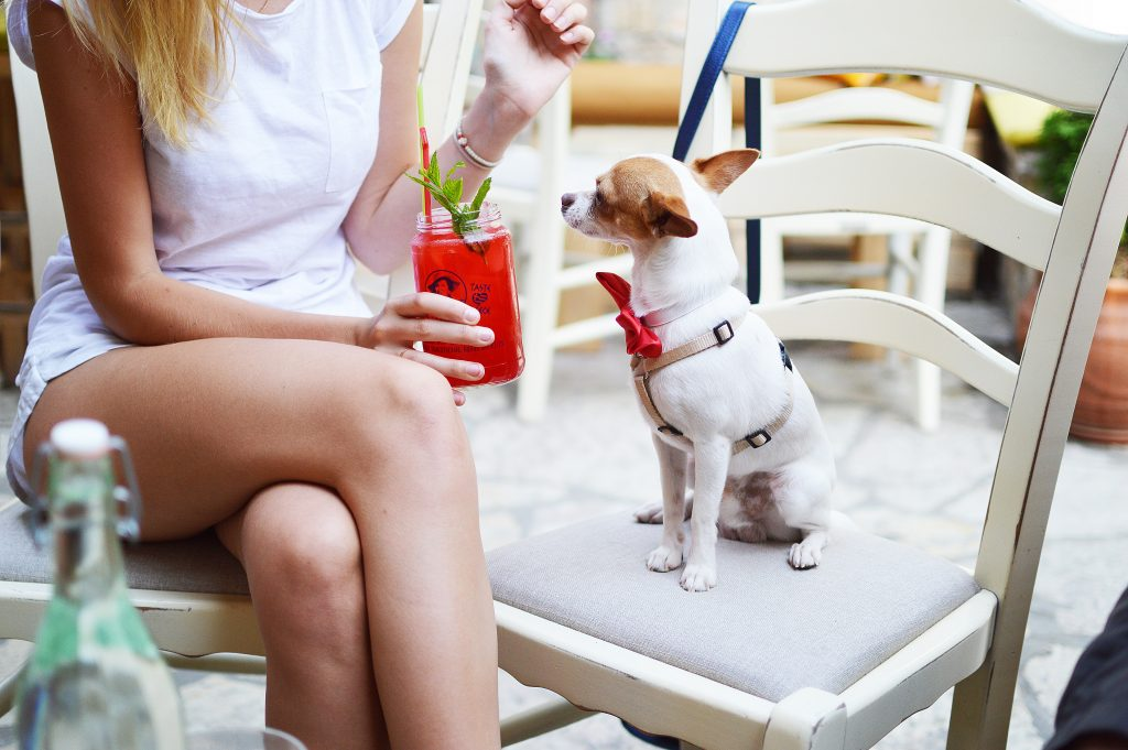 BEST PET FRIENDLY PLACES TO EAT AND DRINK in Birmingham