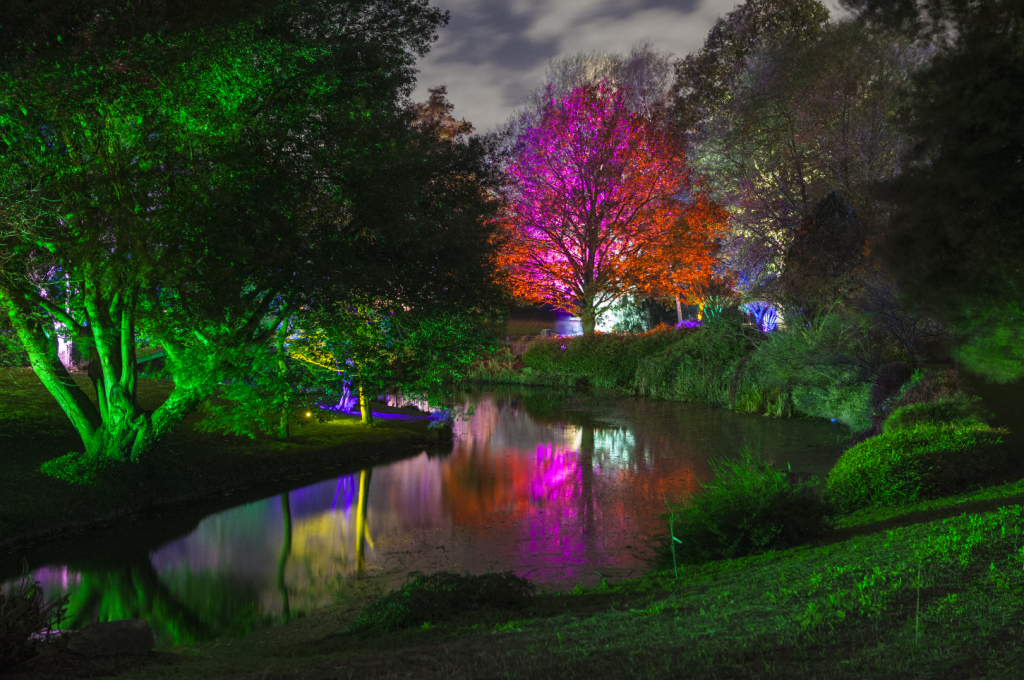 A river and trees lit up at Enchanted Woodland