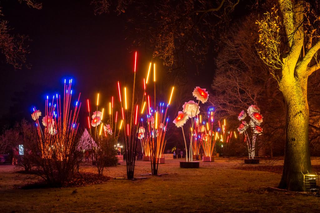 A garden full of magical lights