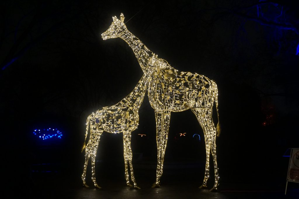 A mum and baby giraffe made out of lights.