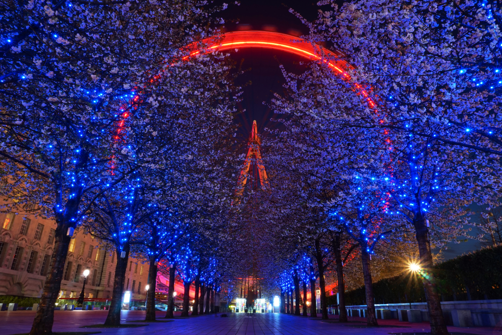 The London Eye lit up at night, blue and red colours