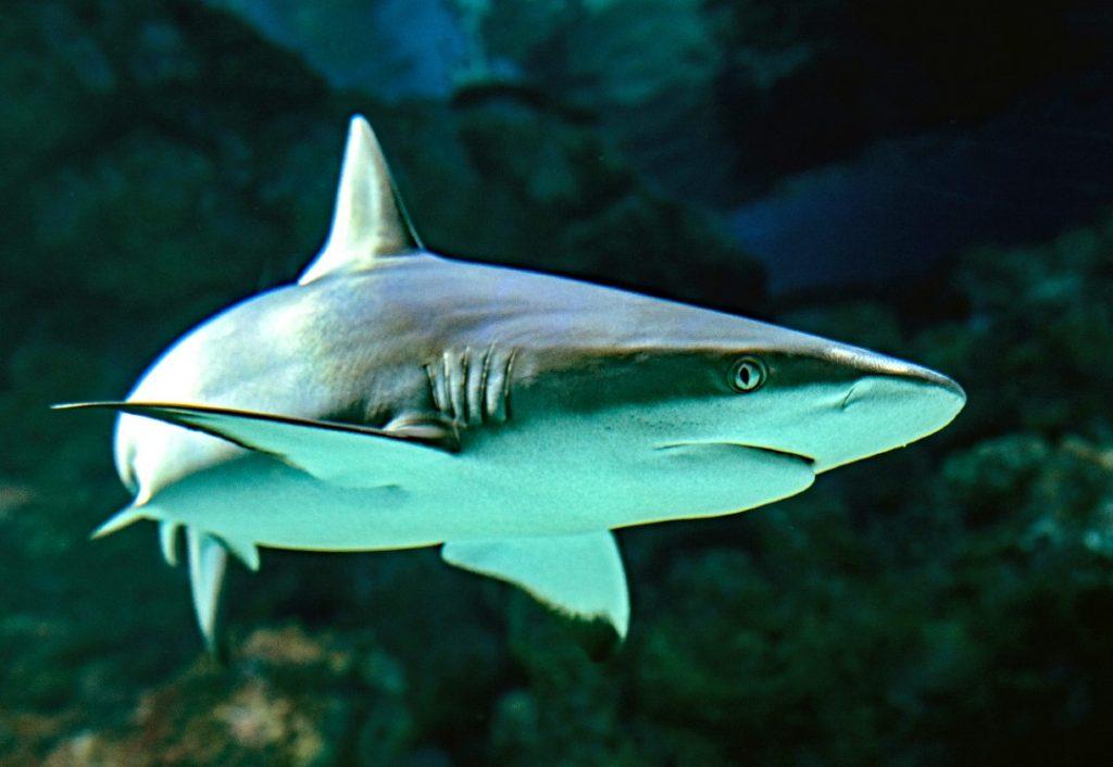 Oceanarium shark half term Bournemouth