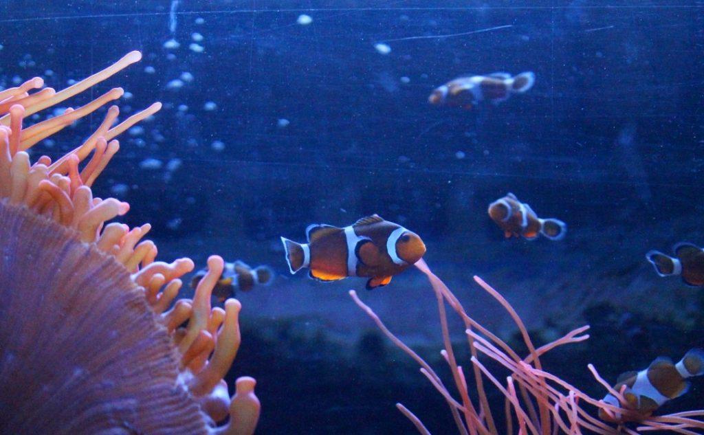 Brighton sea life fish