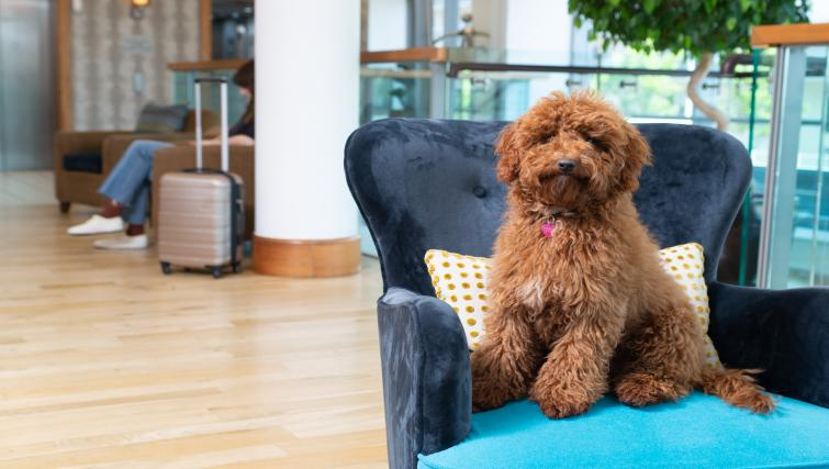 Pet friendly at Staybridge Suites Liverpool - Citybase Apartments